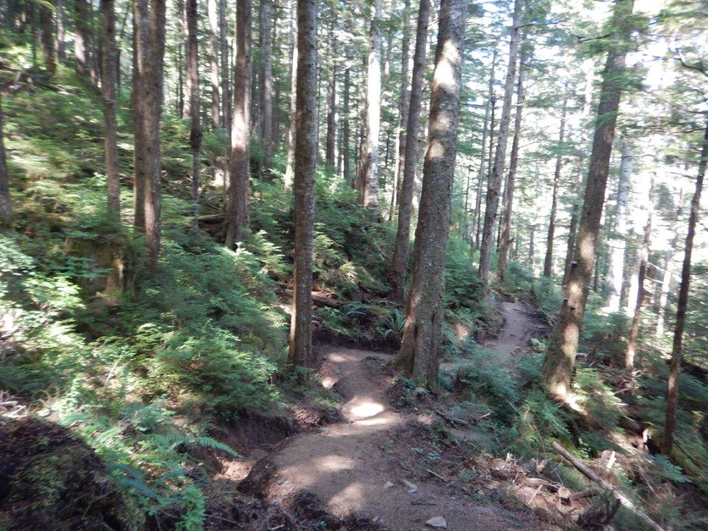 Tall Trees Trail