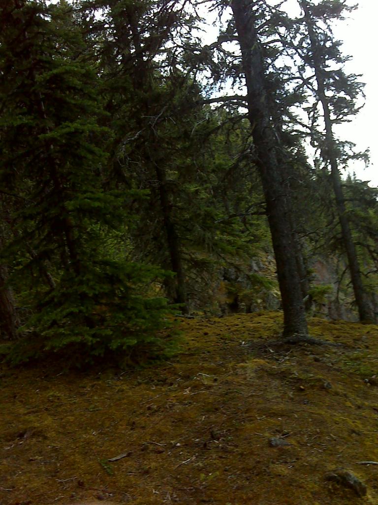 Fraser Mtn. Trail