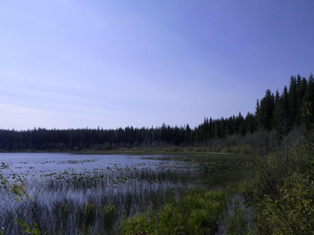 Flyfish Lake # 1