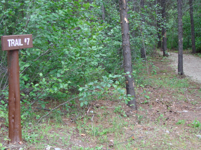 Demonstration Forest Site 4