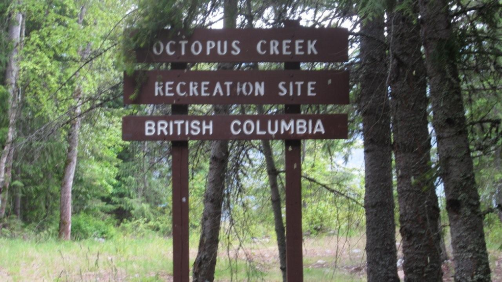 Octopus Creek