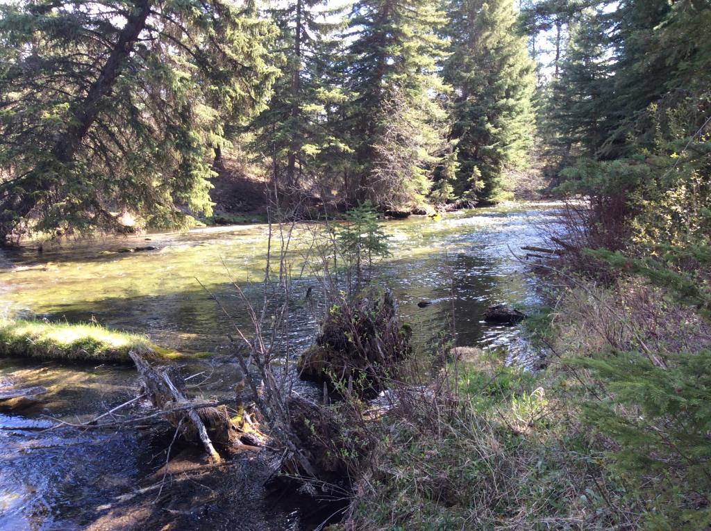 Kikomun Creek
