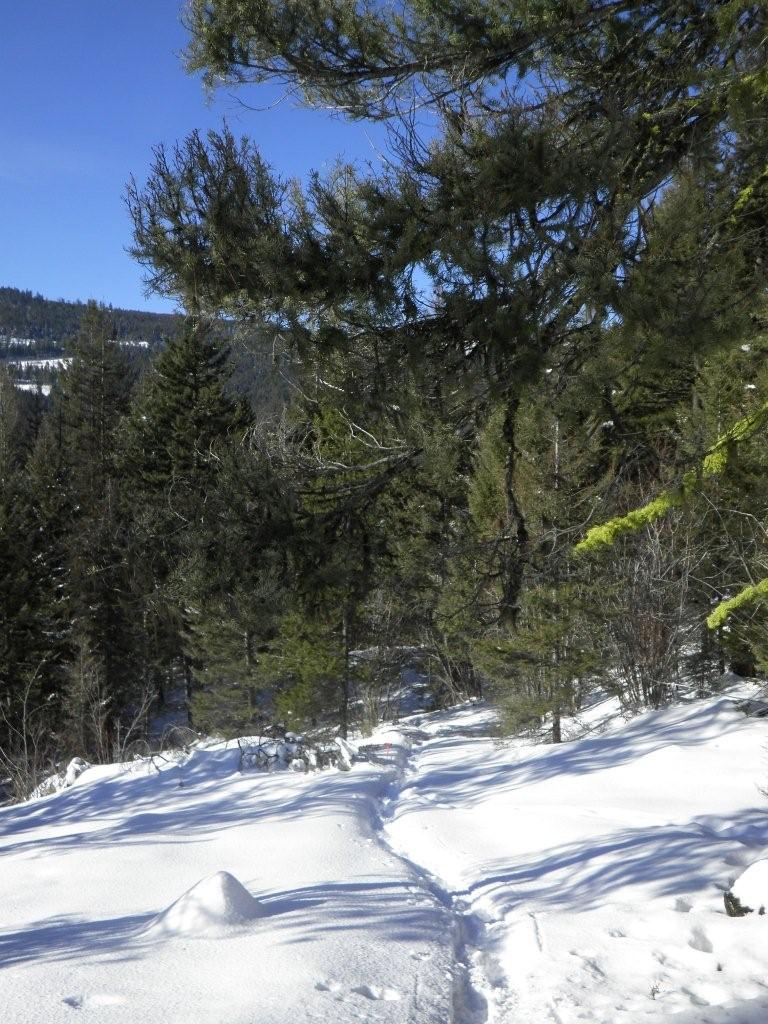 Telemark Cross Country Ski Trails