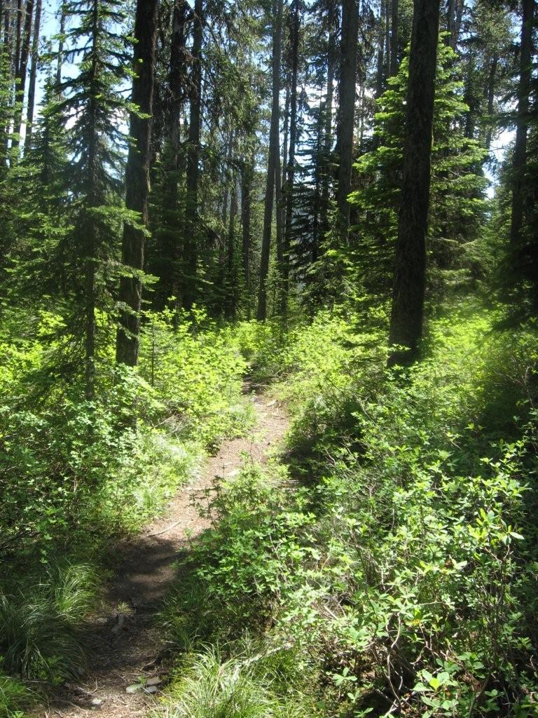 Baldy Lake Trail