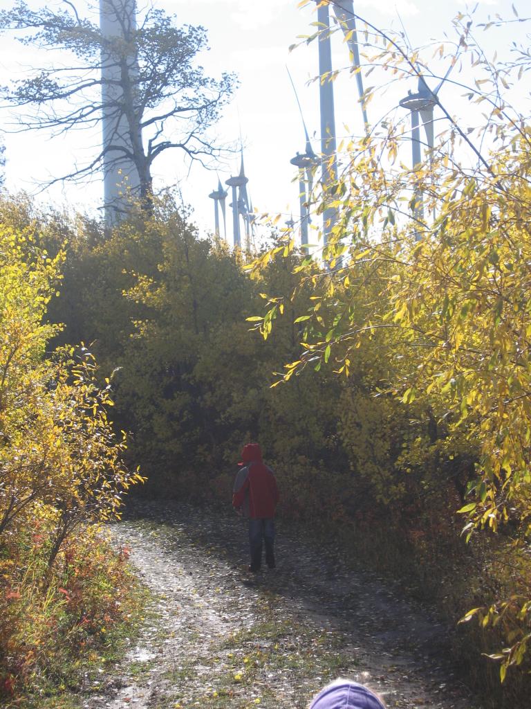 Bear Mtn Community Forest