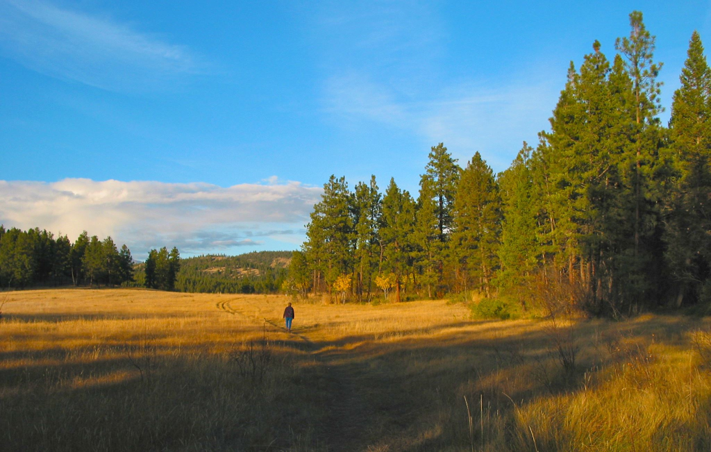 Cranbrook Community Interpretive Forest