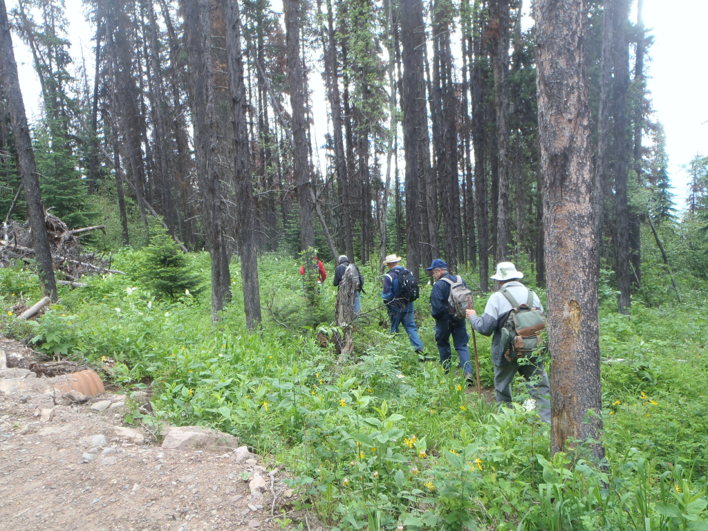 Smithers Community Forest Trails