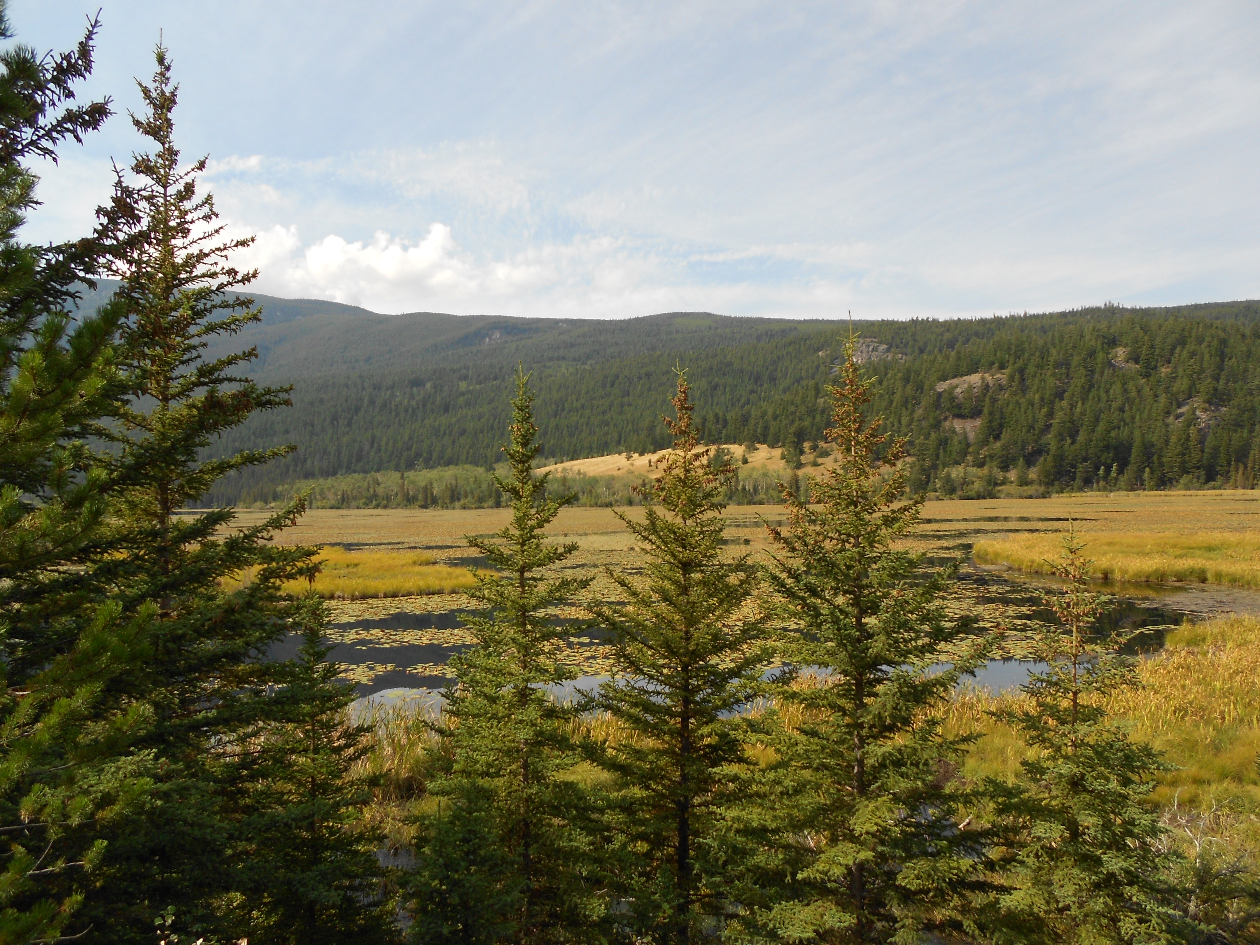 Sapeye - Waterlily Creek Trail