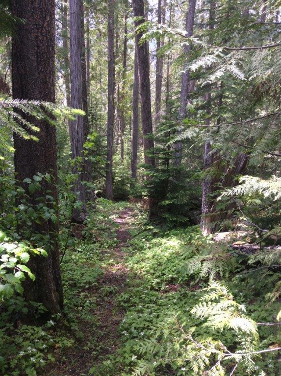 Lang Lake Interpretative Forest Trail